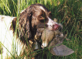 0041-7-chasse-chien